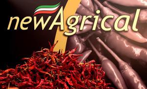 artigianato e made in italy, new agrical, prodotti tipici,