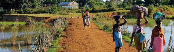 Madagascar: gli immancabili della grande isola.